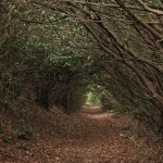 green tunnel appalachian trail